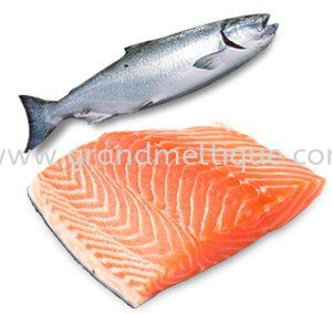 Frozen Salmon / Fresh Atlantic Salmon / Salmon Trout / Salmon Fillet