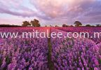 1-615_Lavendel_prn Komar Photomural Vol:14 Wallpaper (0.53m x 10m)