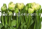 8-900_Tulips_prn Komar Photomural Vol:14 Wallpaper (0.53m x 10m)