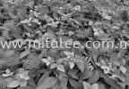 8-914_Forest_Floor_prn Komar Photomural Vol:14 Wallpaper (0.53m x 10m)