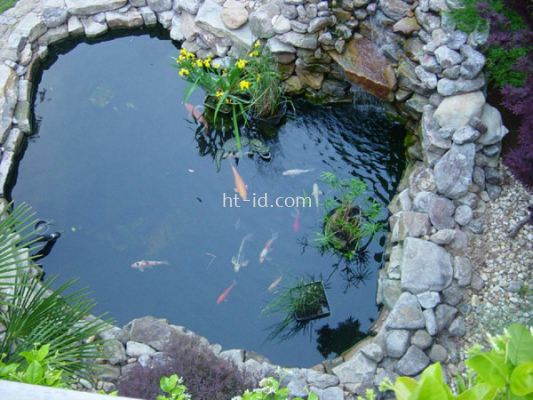 Fish Pond Design