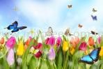 FL 33 Flower and Glass Wallpaper Customize