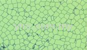 PJD 901 Conductive - Static Dissipative PVC Tile