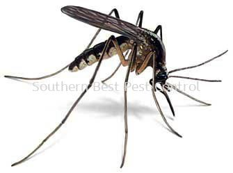 Mosquitoes Control