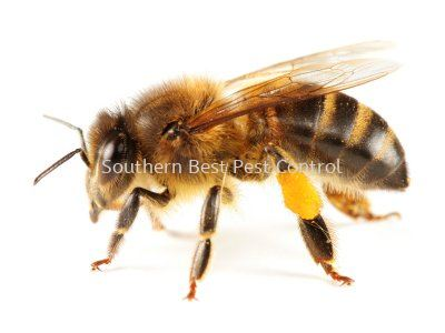 Bees Control Bees Control