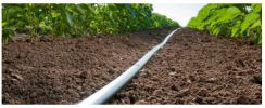 D5000 Flow Regulated Drip Line  Drip Lines Rivulis Irrigation