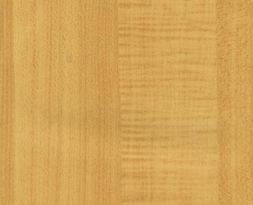 Maple (MA 2910)