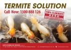 Termite Solution