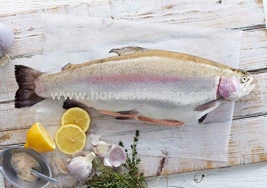Petuna Ocean Trout - Wagyu of the Sea!