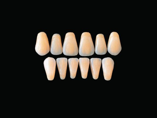 Hard Resin Teeth (C3-C6)