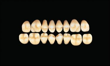 Hard Resin Teeth (M28)