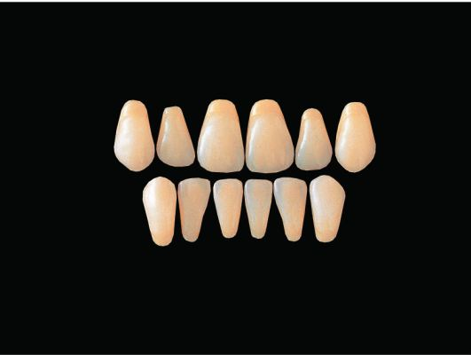 Hard Resin Teeth (O3-O6)