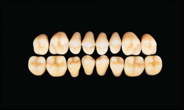 Hard Resin Teeth (M30)