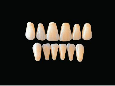 Hard Resin Teeth (T3-T6)