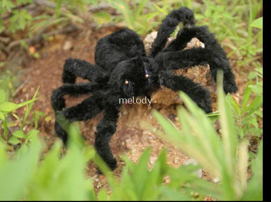 Halloween Spider Black 70cm - 7014 0251 11