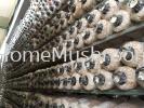 Mushroom Bagging