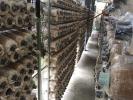 Oyster Mushroom Bagging