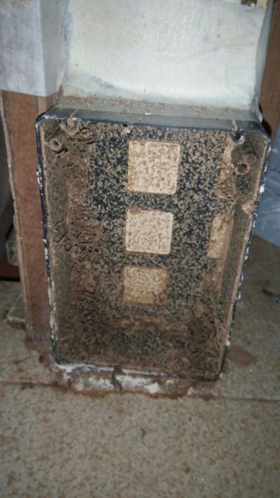 Termite Control Selangor