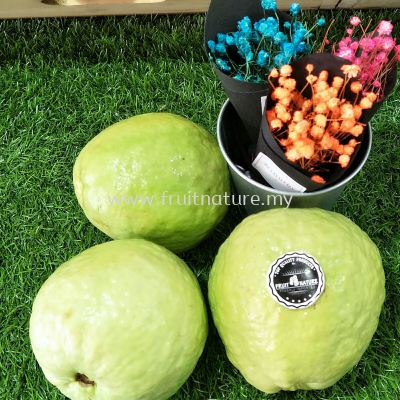 Guava Lohan(+/-0.71kg) order by pc
