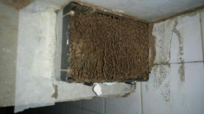 Termite Treatment
