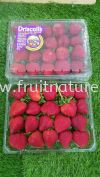 US Long Stem Strawberries 454g (Pack) Strawberry Fruits