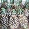 Josephine Pineapple (pc)  Pineapple Fruits