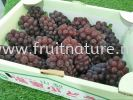Delaware Grape Japan (call for enquiry)  Grapes Fruits