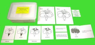NEW! - Nomenclature and Activity Cards for Nature Puzzles (CM142)