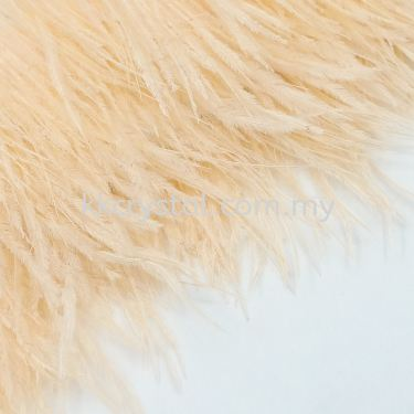 Ostrich Feather, Color 1#