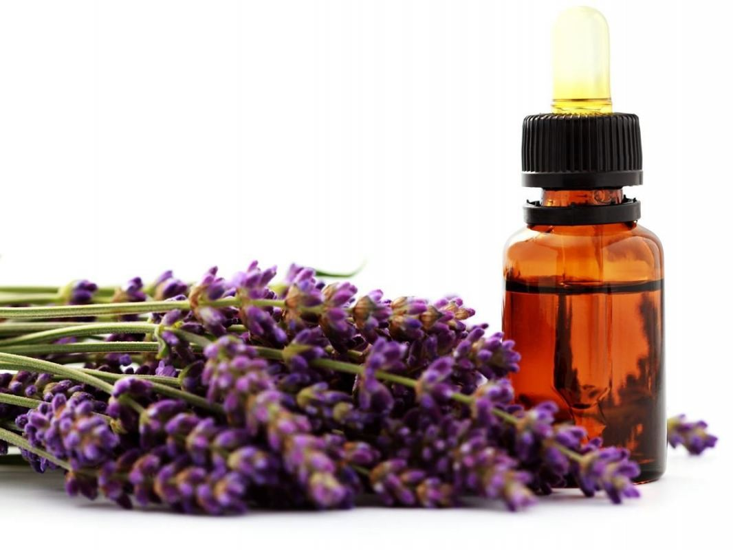 Lavender Lavender Essential Oil Centre, Treatment, Supplier, Supply ~ Ann Beautycare & Essential Spa