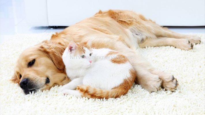 Pets Odor Removal