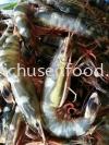 Fresh Sea Prawn (Udang Bunga) Frozen Shrimp