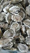 Half Shell Oyster Frozen Clam