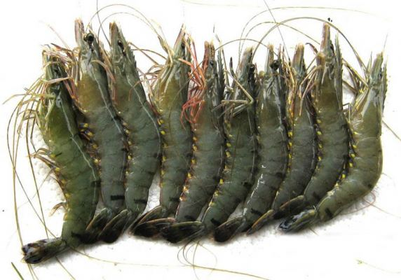 Black Tiger Prawn