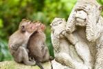 Sacred Monkey Forest, Ubud Indonesia Sightseeing