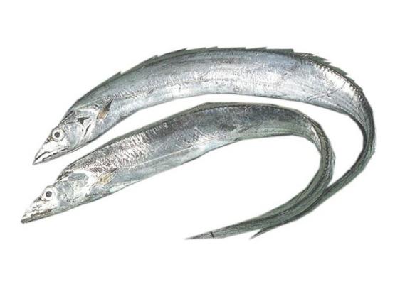 Ikan Timah