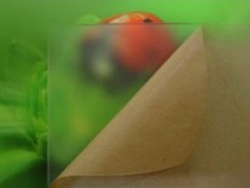 High Adhesive Masking Paper 高粘度保护纸