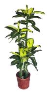 5.5 Ft Golden Bachia (FS056) Artificial Plant