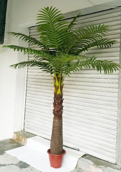 8 Ft Coconut Tree (FS080)