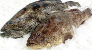 Grouper WR Fillet Frozen Fish