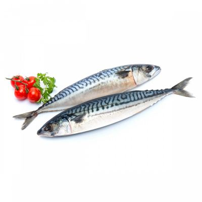 Norway Saba Mackerel