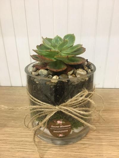 Succulent Terrarium Plant 5