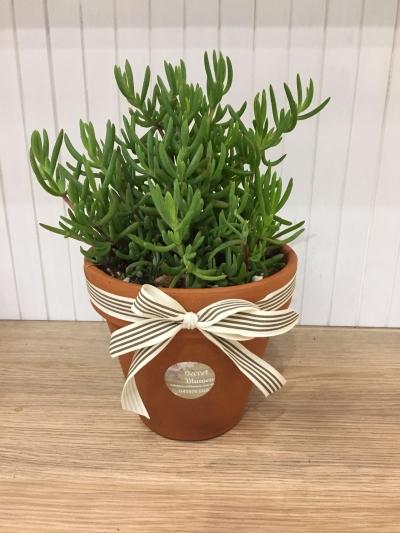 Succulent Terrarium Plant 9