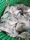 正斗昌 Sea White Promfret 新鲜鱼类 Fresh Fish