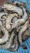 鲜草虾 Fresh Tiger Prawn 虾类 Prawn