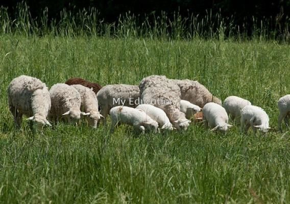 Animal & Crop Production