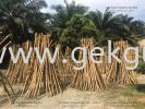 STEP OF PROCESSING RATTAN RAW MATERIAL