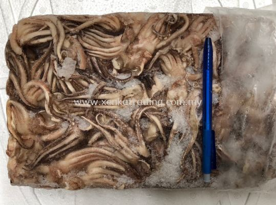 FC0028-1  Frozen Cuttlefish Tentacles (Ika Geso) ī�~�P