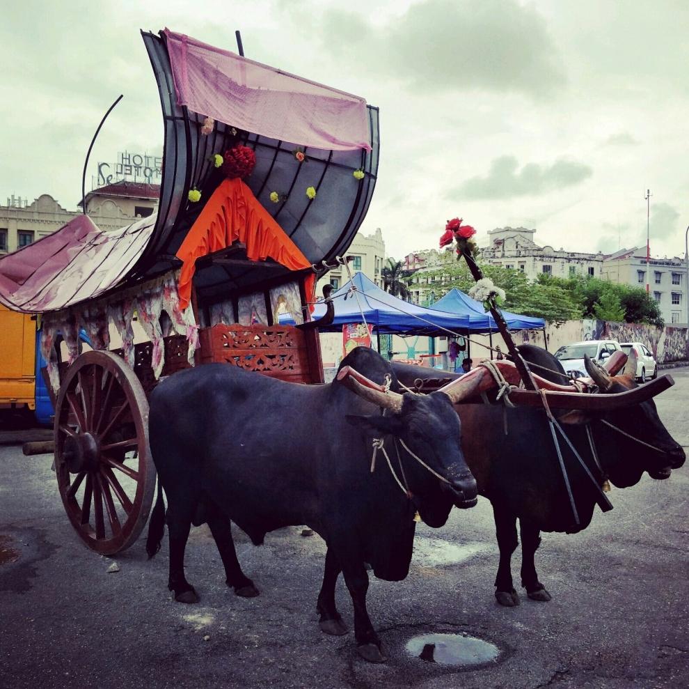 Bullock cart coming to Melaka town