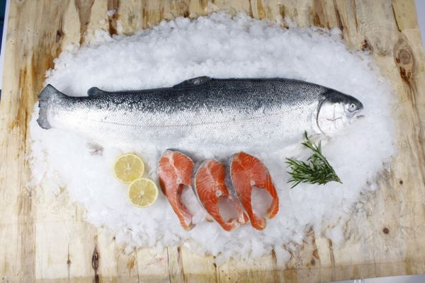 Fresh Salmon Whole Fish